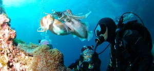 Scooba Diving, Xerxis Hotel in Nea Roda, Halkidiki, by the sea and the beach